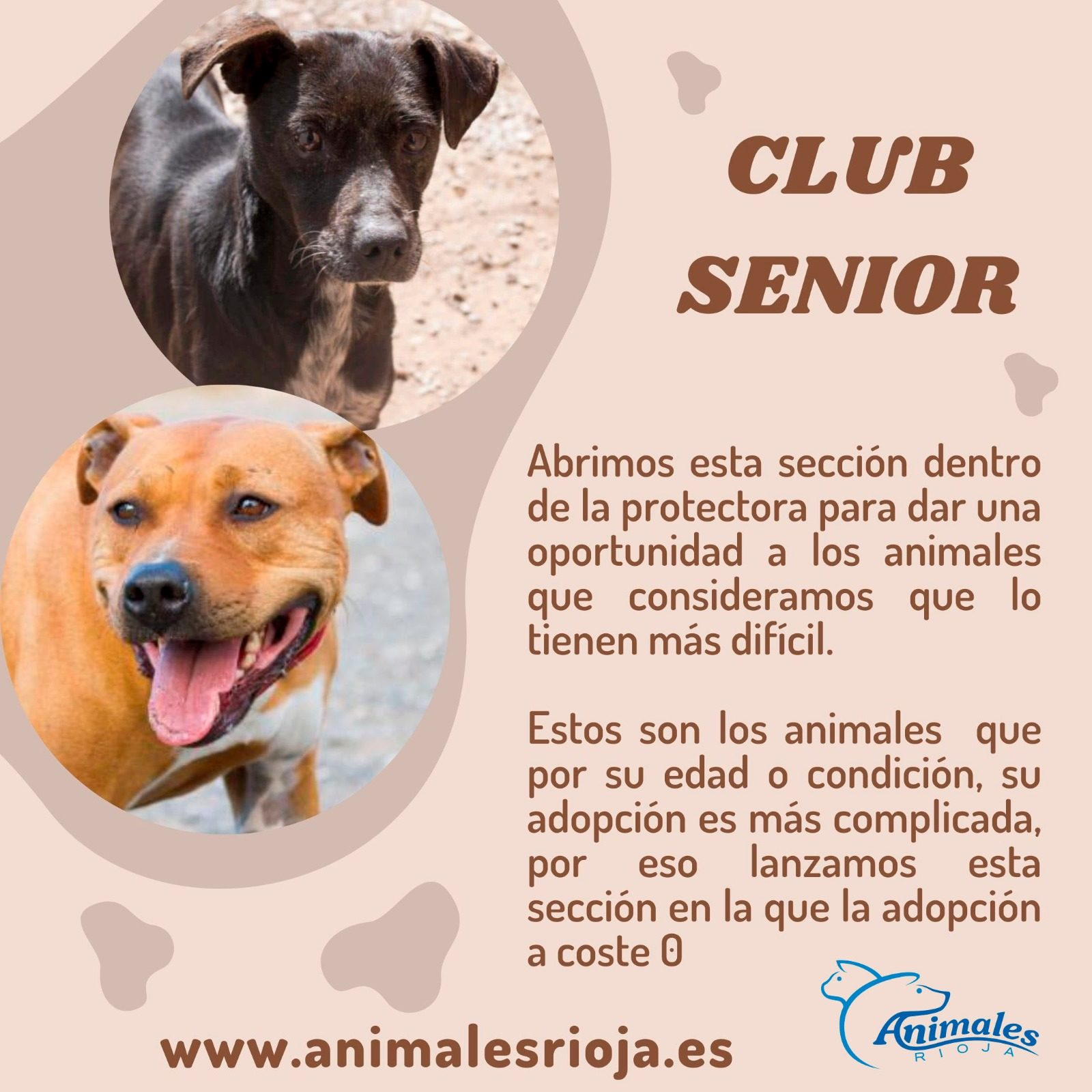 Club Senior