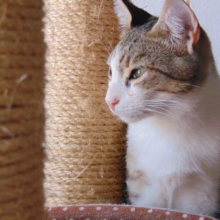 Acoge gatos Animales Rioja