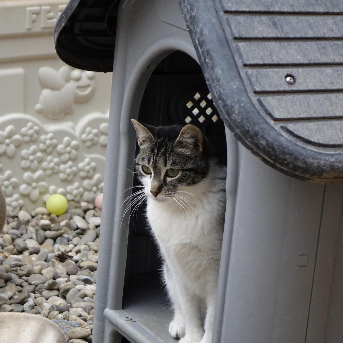 Adoptar gata Milana Logroño