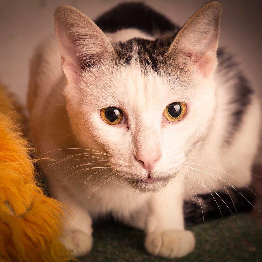 Adoptar gato Iker