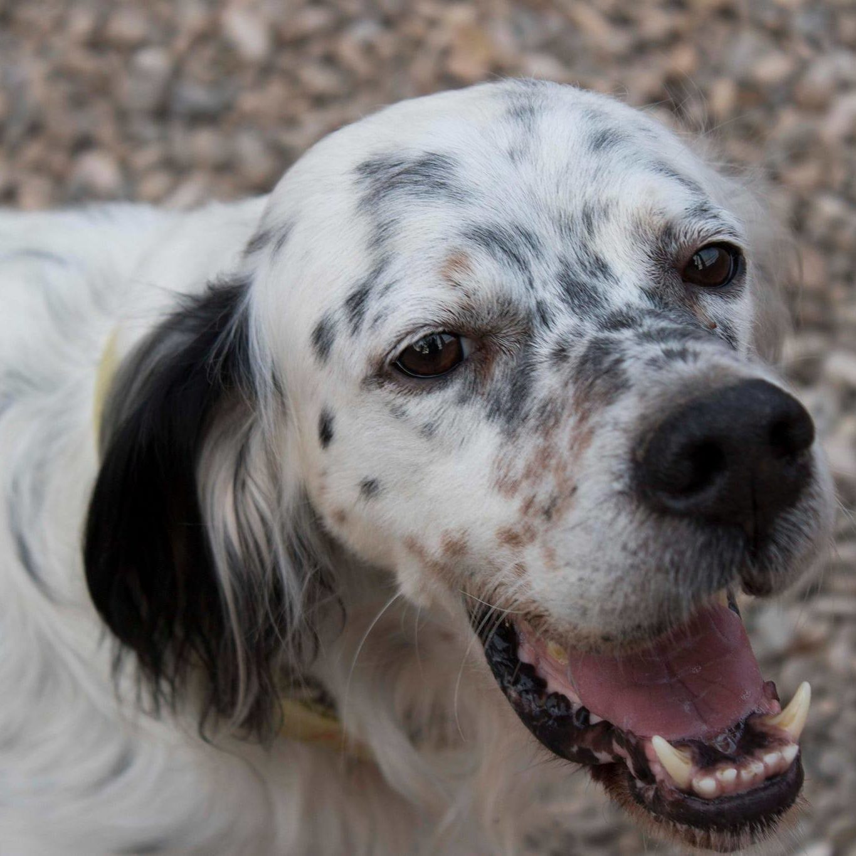 Adoptar Orion Perro