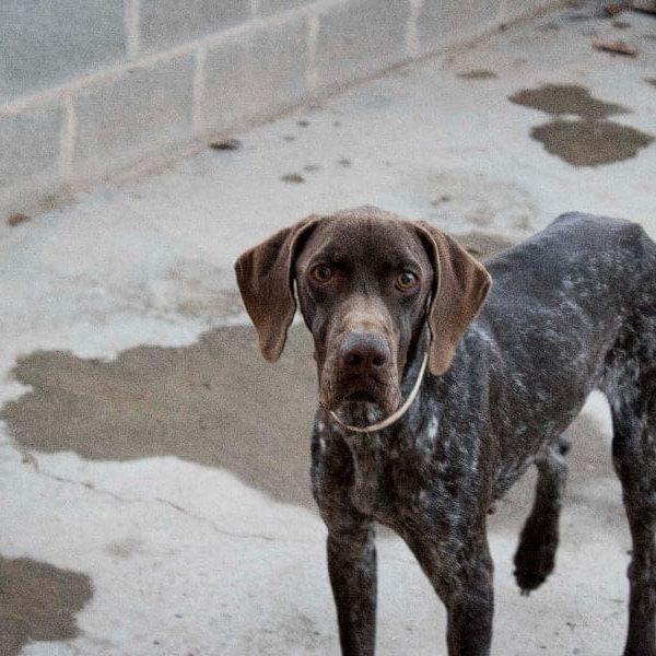 Adoptar Perro Figo