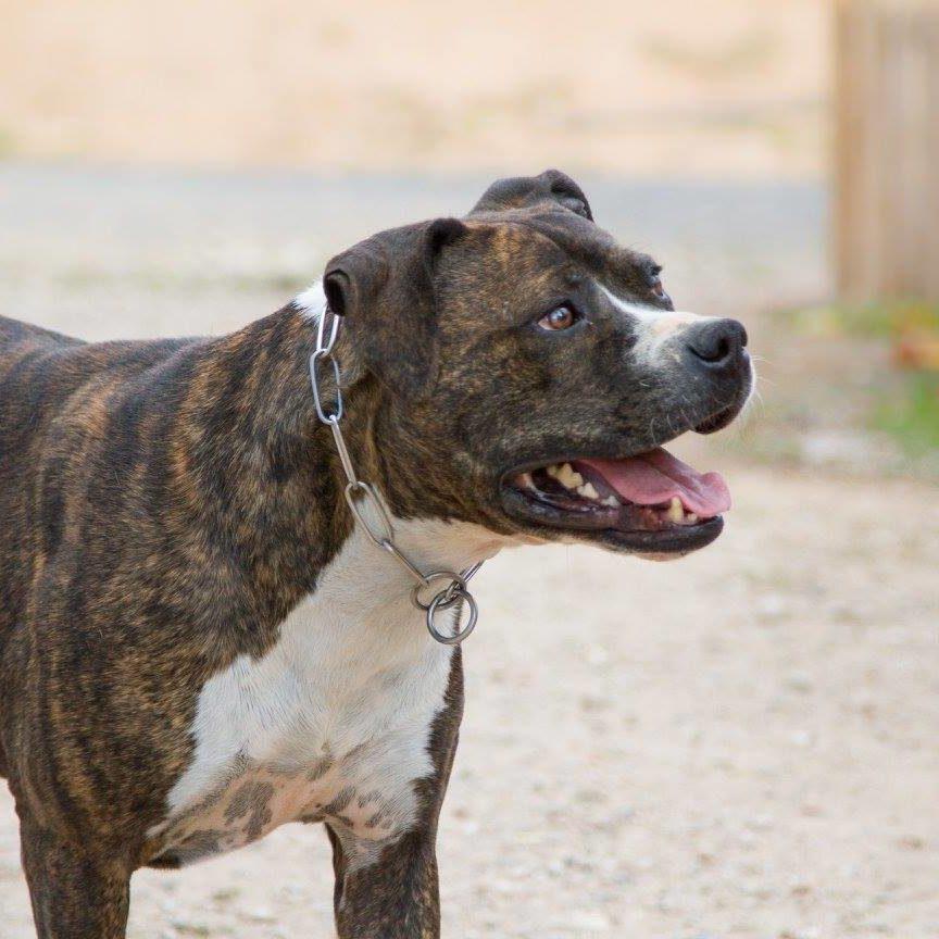 John Adoptar Perro