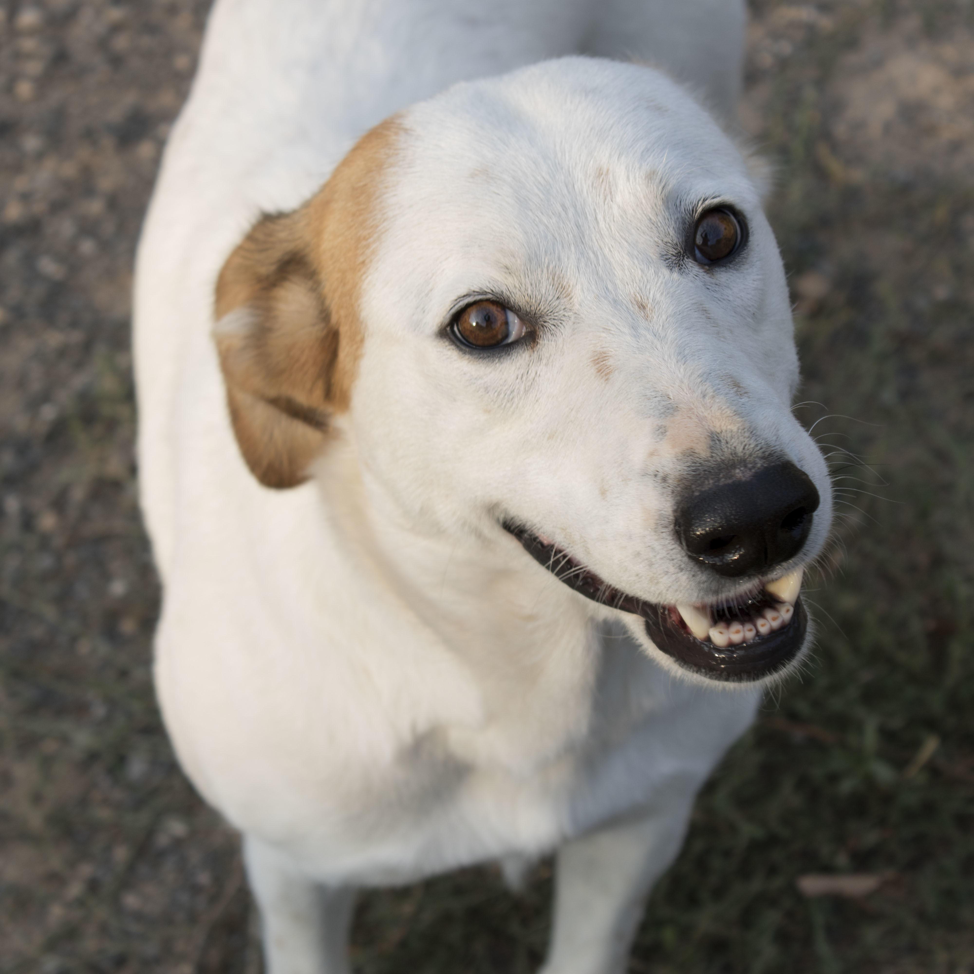 Nevada Adoptar Perra