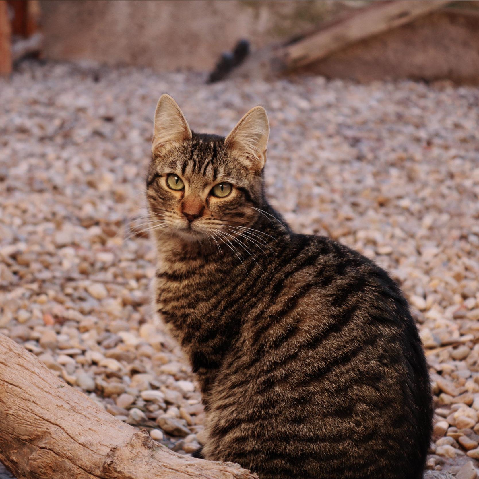 Zu gato en adopción La Rioja